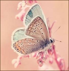 Inspiracje na wiosne motylek paznokcie