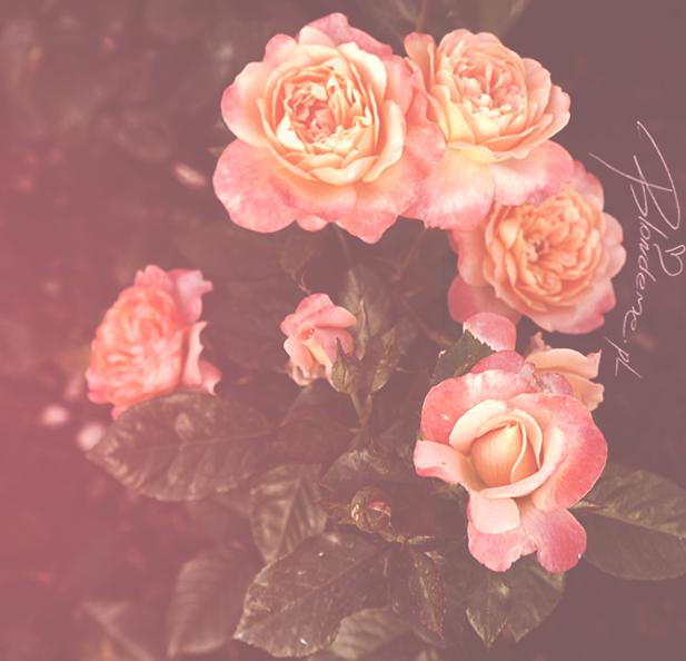 Piekne roze blog uroda moda