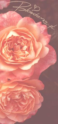 Roze lososiowe piekne