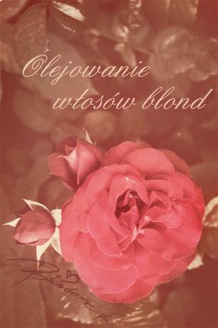 Olejowanie wlosow blond blog roza