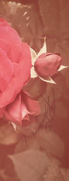 rozowa-roza-blog-uroda-wlosy