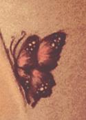 rozowy-motyl-blog