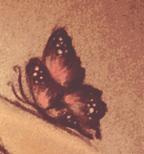 rozowy-motyl
