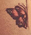 rozowy-motylek